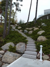 low-maintenance-hillside-planting-2